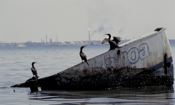Birds covered in oil from nearby refinery on Lake Maracaibo, Venezuela