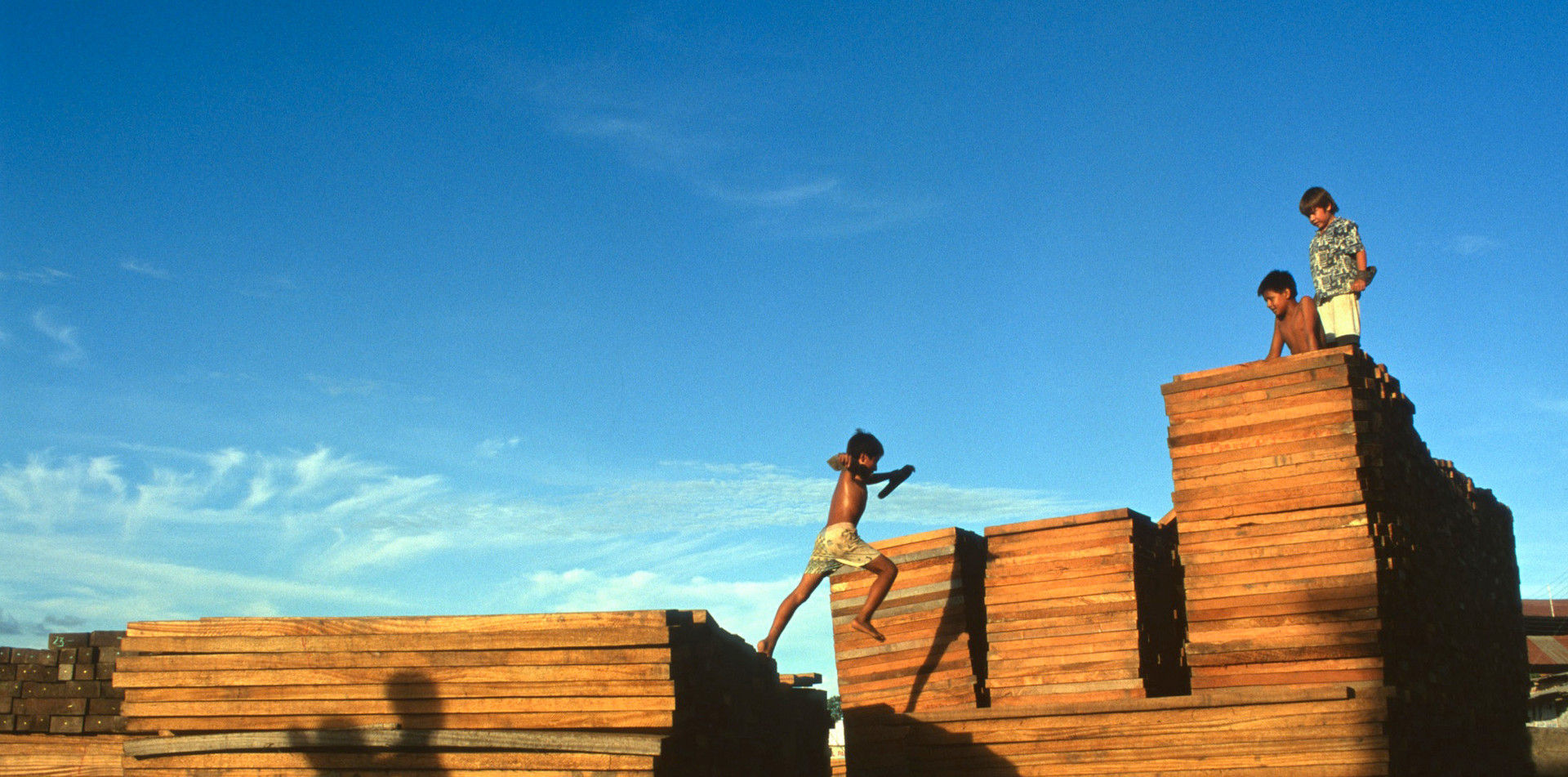 Jumping on hardwood in the Bolivian Amazon