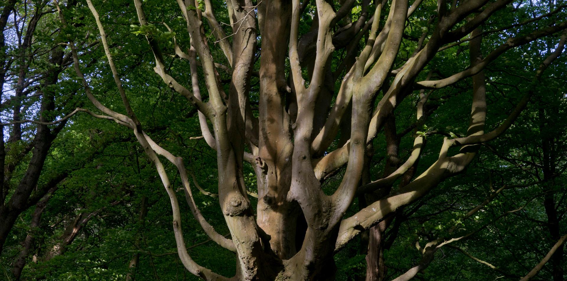 Nature Trail arboretum