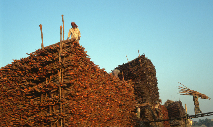 Pile of timber for construction in Bangladesh