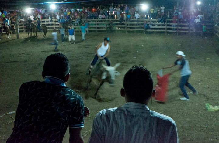 Rodeo with bulls in Ometepe, Nicaragua