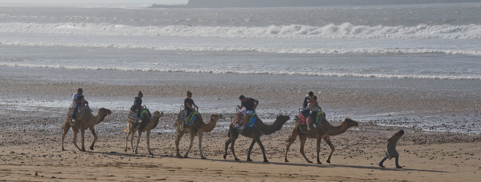 Tourists riding camels on Essaouira beach in Morocco