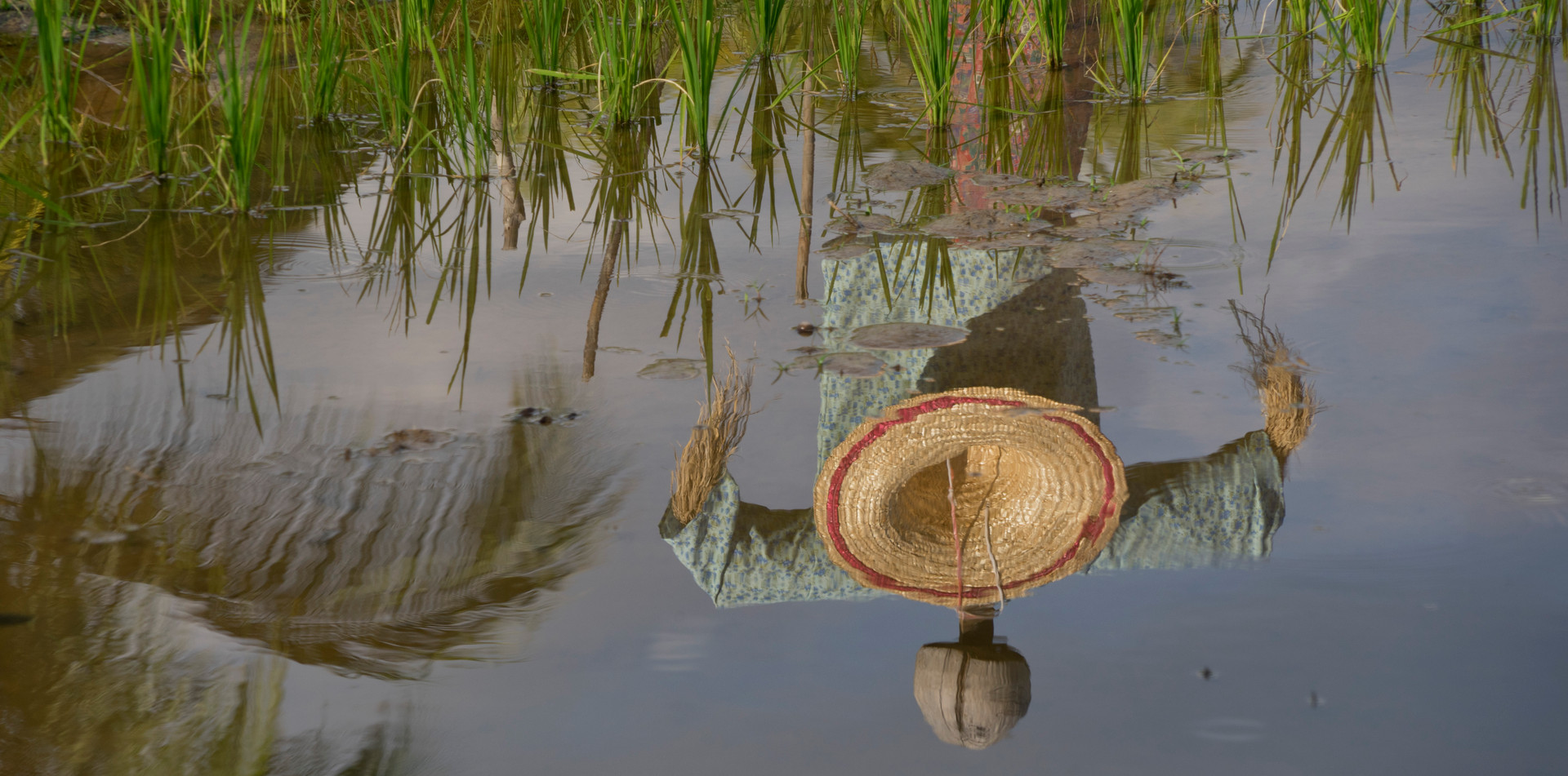 Scarecrow in traditional dress in a rice paddy field in Malaysia