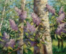 315. Сирень с берёзой 40х50, х.,м., 2019
