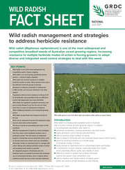 Wild  Radish Fact Sheet  Client: Grains Research and Development Corporation (GRDC)  Audience: Grain growers  Published: in print, downloadable PDF