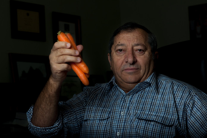 Rocky Lamattina: An icon of the fresh produce markets around the nation, the Lamattina family grow 'Australia's favourite carrots' with a mix of innovation, hard work and family pride. For Book: Impresario.Italians growing Victoria. Photo by Brad Collis