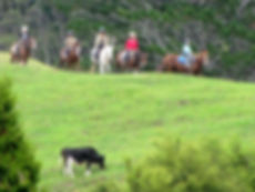 horsetrekbab.jpg