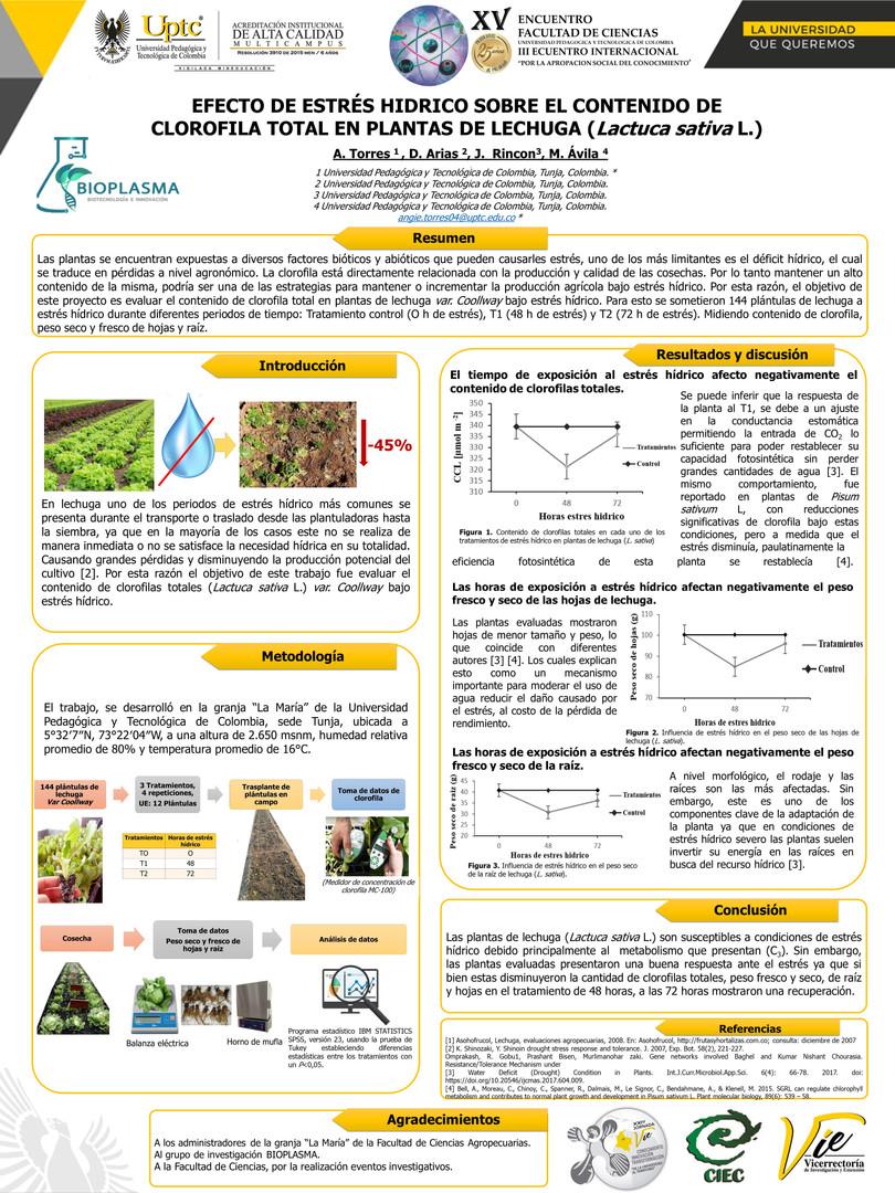 Efecto de estrés hídrico en el contenido de clorofilas totales en plantas de lechuga (Lactuca sativa L.)