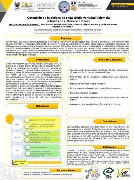 Obtención de haploides de papa criolla variedad Colombia a través de cultivo de anteras