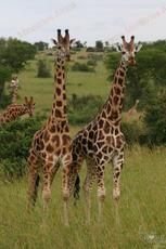 annemie___uganda__63_.jpg