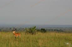 annemie___uganda__59_.jpg
