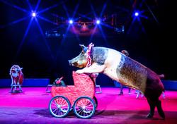 Oink pushing Piglet in the pram