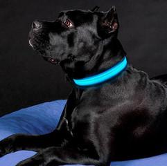 LEDOG-קולר-לד-לכלבים-6.jpg