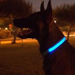 LEDOG-קולר-לד-לכלבים-3.jpg