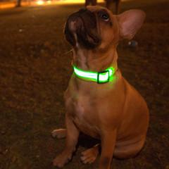 LEDOG-קולר-לד-לכלבים-5.jpg