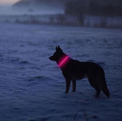 LEDOG-קולר-לד-לכלבים-4.jpg