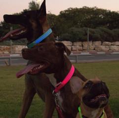 LEDOG-קולר-לד-לכלבים-7.jpg