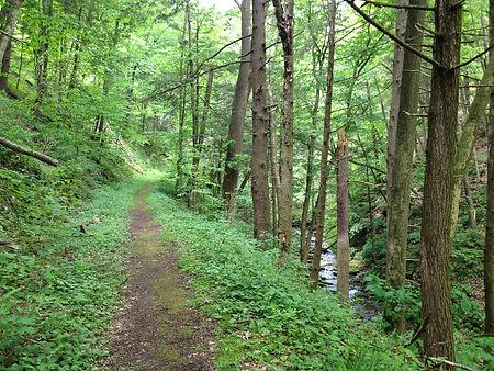 Black Forest Trail 002.JPG