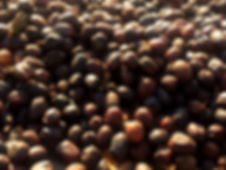 cereza de café secando al sol