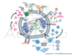 agf39-cytokines-therapy-tricoclin.jpg