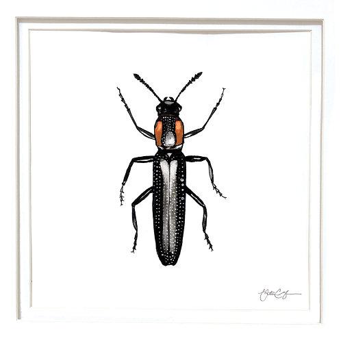 Slender Lizard Beetle