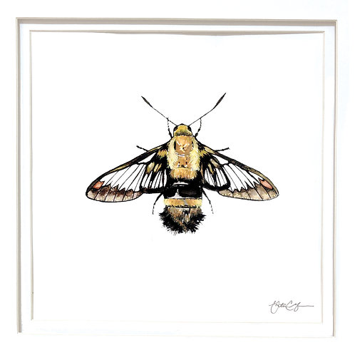Strawberry Clearwing Moth