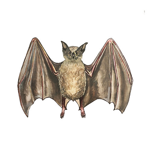 Lesser Long Nosed Bat