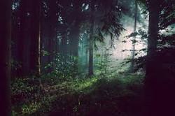 fuori dal bosco