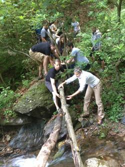 survival bridge