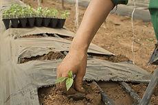植物を植えます