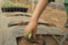 Las plantas de siembra