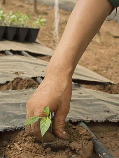 Planting Plants