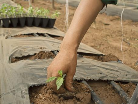 獨家》農業塑膠膜一年用2萬噸 農委會祭減塑配套措施