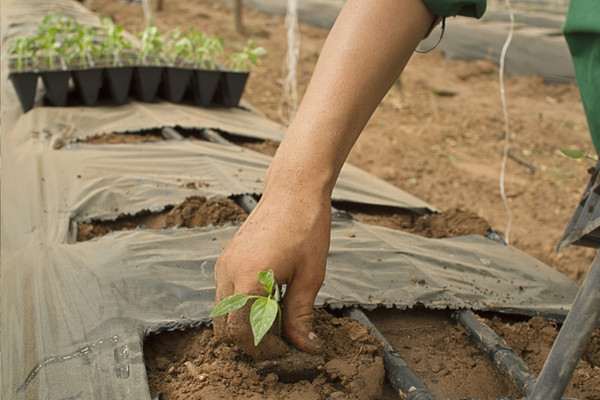 Diploma in Agricultural Science (Plantation Management)