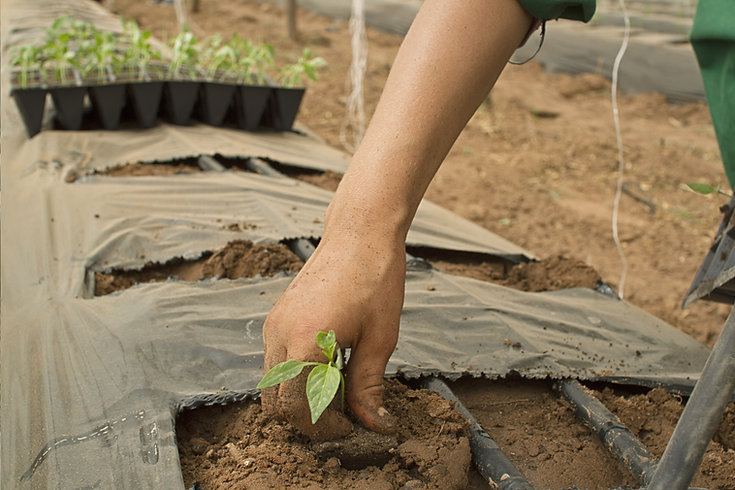 piantare piante