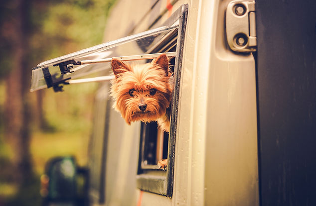 RV Travel with Dog. Motorhome Traveling