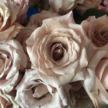 quick sand rose