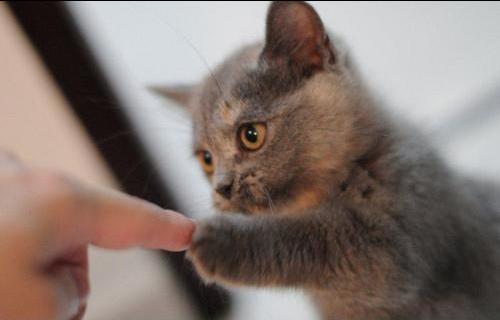 Kitten dapp