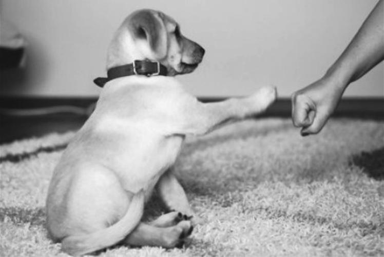Puppy dapp
