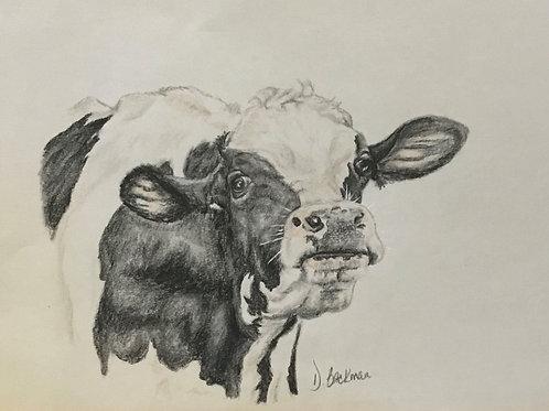 Original Cow Drawing