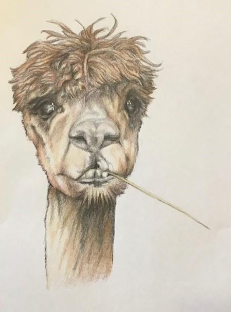 Artwork Llama