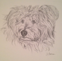 Sketched Pet Portrait