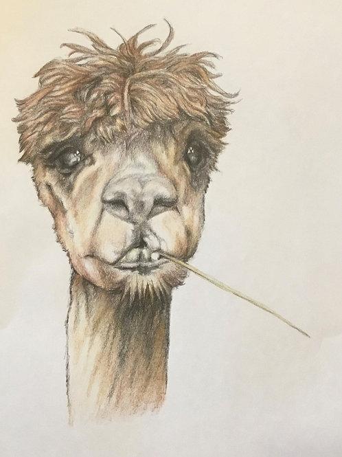 Original Llama Drawing