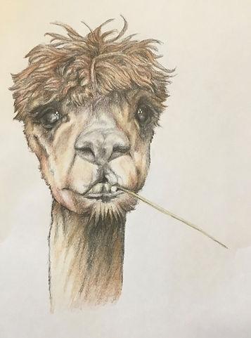 Artwork Llama.jpg