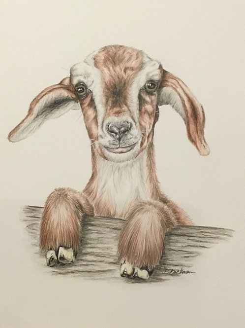 Original Baby Goat Drawing
