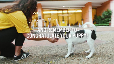 Onemind Dogs (Finland) - Puppy Training Course (Videography, Video Production, Acting)