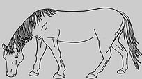horse%20without%20brand_edited.jpg