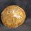 Thumbnail: Fossilized Sand Dollars