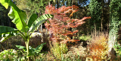 Autumn garden 6