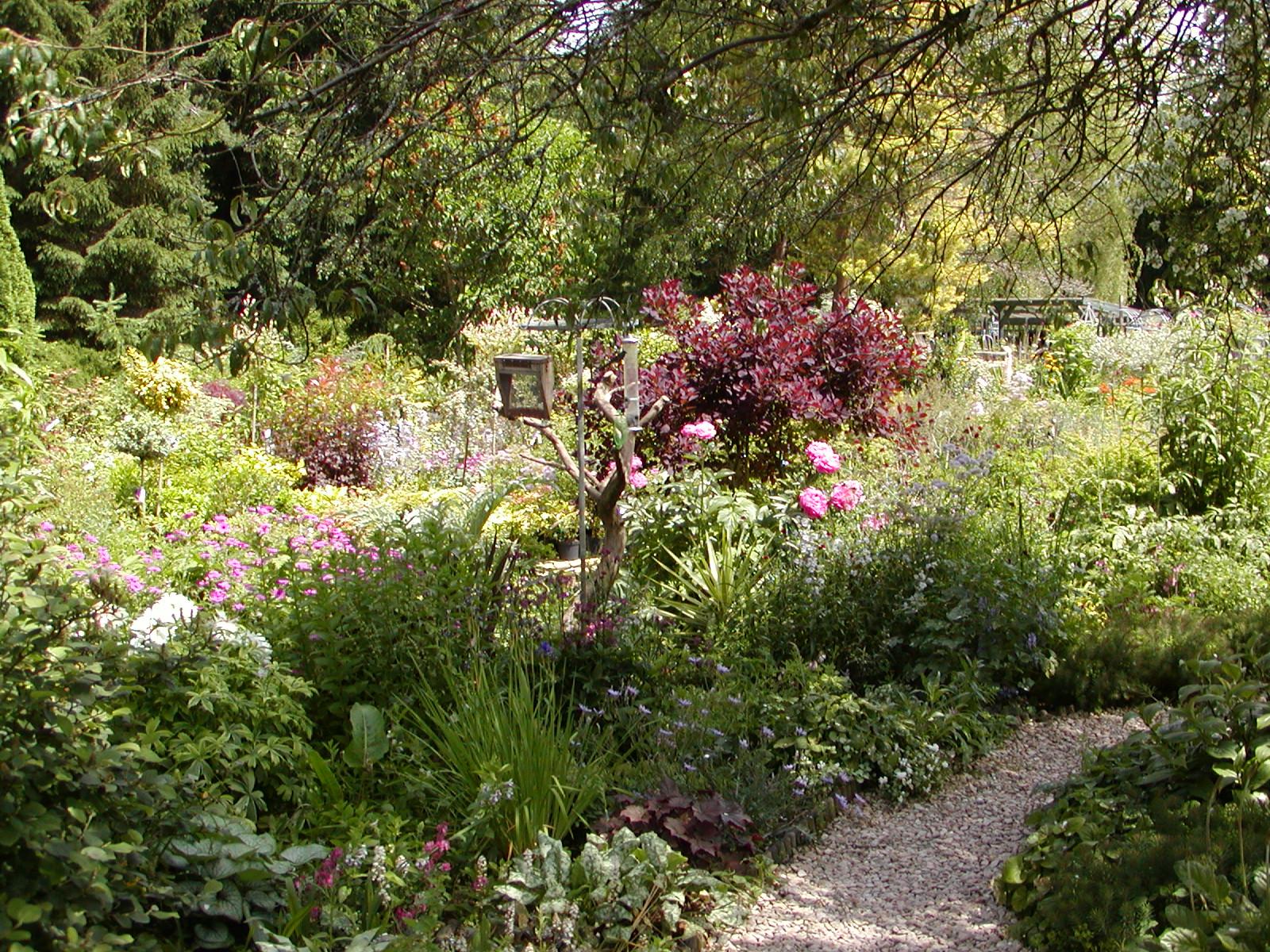 Garden-Jun-05 006